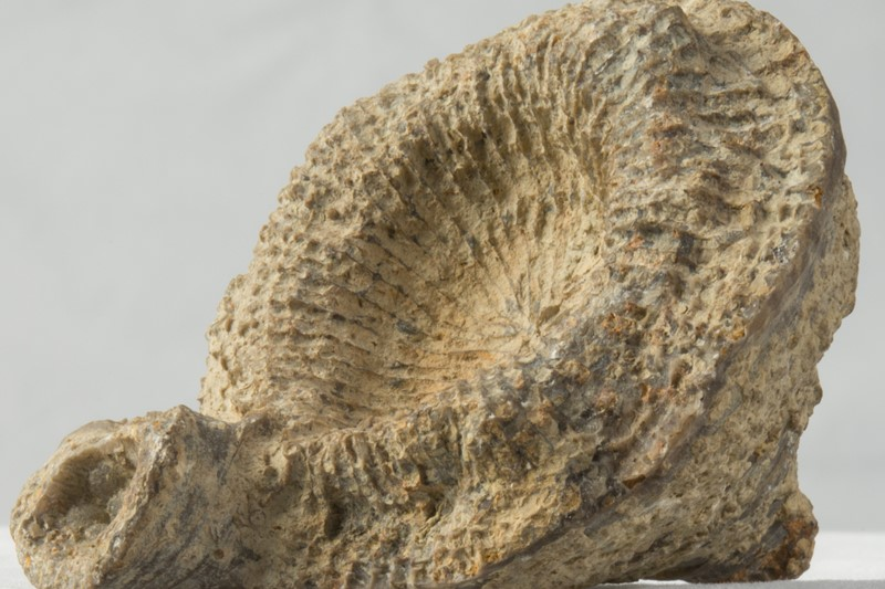 Fossil Review Part 2 - Devonian Period